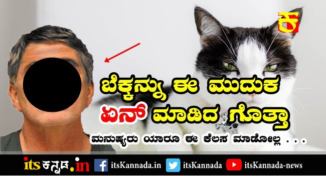 police arrested the accused who dropped cat from the 15th floor-its Kannada